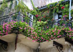 Balkon pełen kwiatów