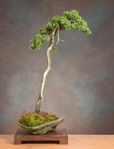 Bonsai Bunjin
