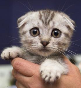 Czy znaleziony kotek może być chory?