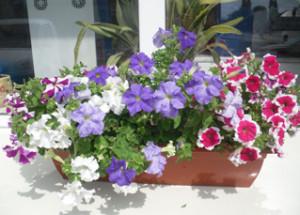 Kalendarz  prac domowych ogrodniczych w kwietniu