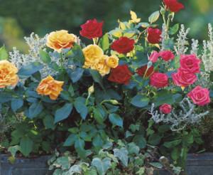 Kompozycja z róż