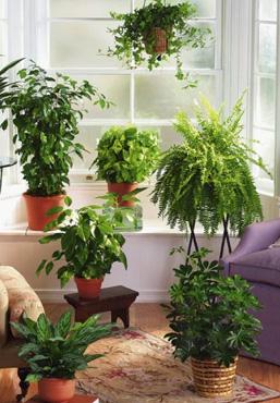 Nawozimy rośliny doniczkowe