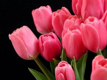 Tulipany i żonkile  Na przekór szarugom wiosenne kompozycje