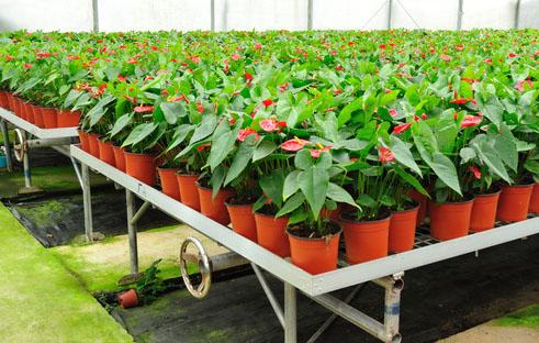 Produkcja roślin ozdobnych