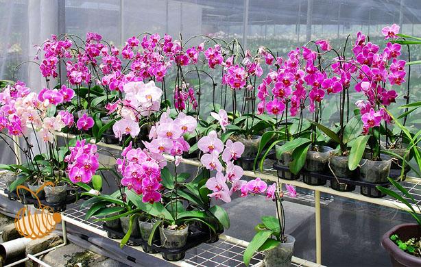 Znaczenie roślin ozdobnych w życiu człowieka