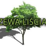 Rośliny liściaste (szkółka roślin) drzewa liściaste