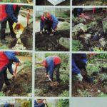 Tworzymy ogród skalny