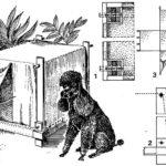 Buda-namiot dla psa