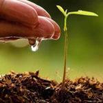 Podstawowe warunki rozwoju roślin