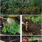 Prawidłowe sadzenie roślin