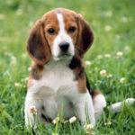 Małe psy - wielkie potrzeby
